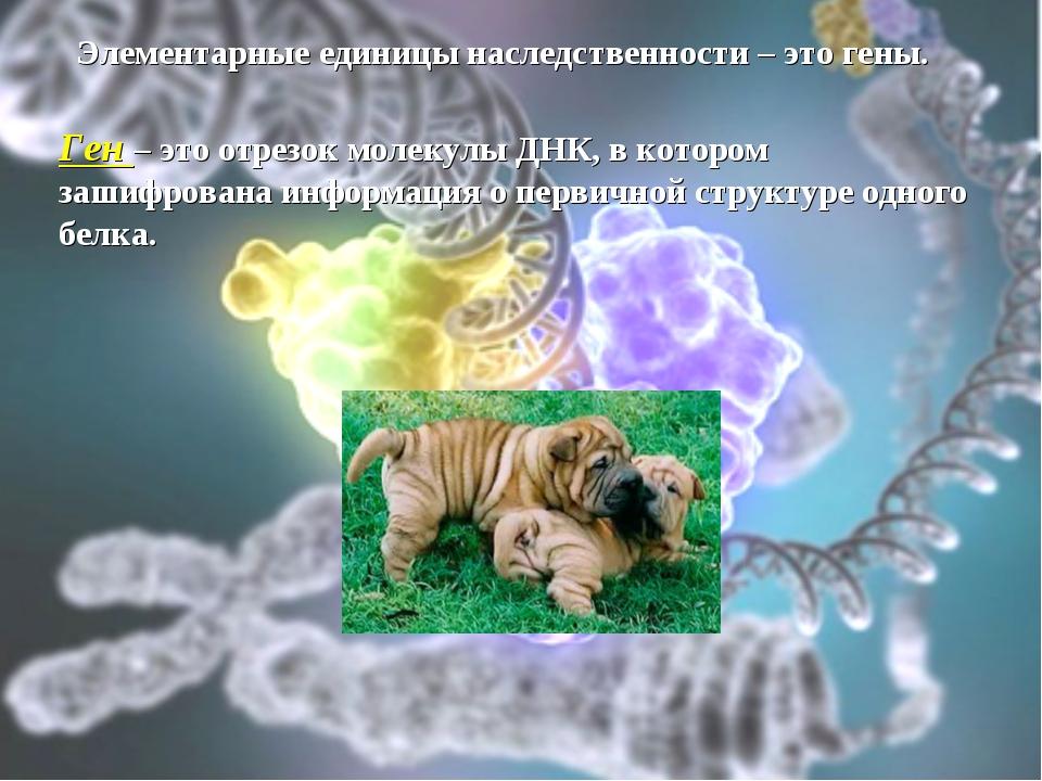 Элементарные единицы наследственности – это гены. Ген – это отрезок молекулы...