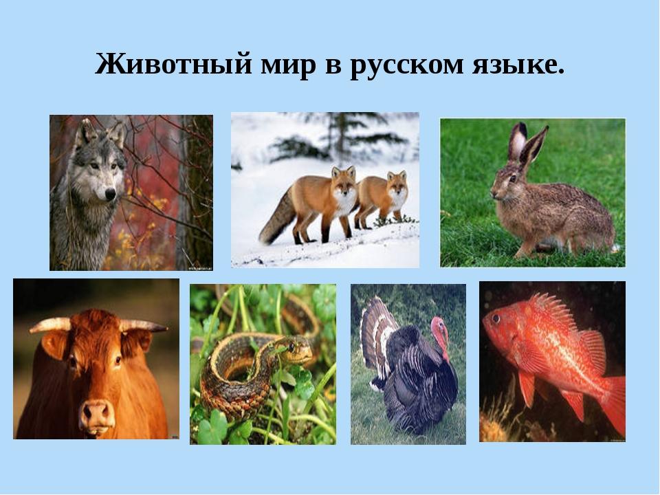Животный мир в русском языке.