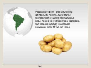 Родина картофеля - страны Южной и Центральной Америки, где и сейчас произраст
