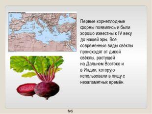 Первые корнеплодные формы появились и были хорошо известны к IV веку до нашей