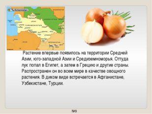 Растение впервые появилось натерритории Средней Азии, юго-западной Азии иС