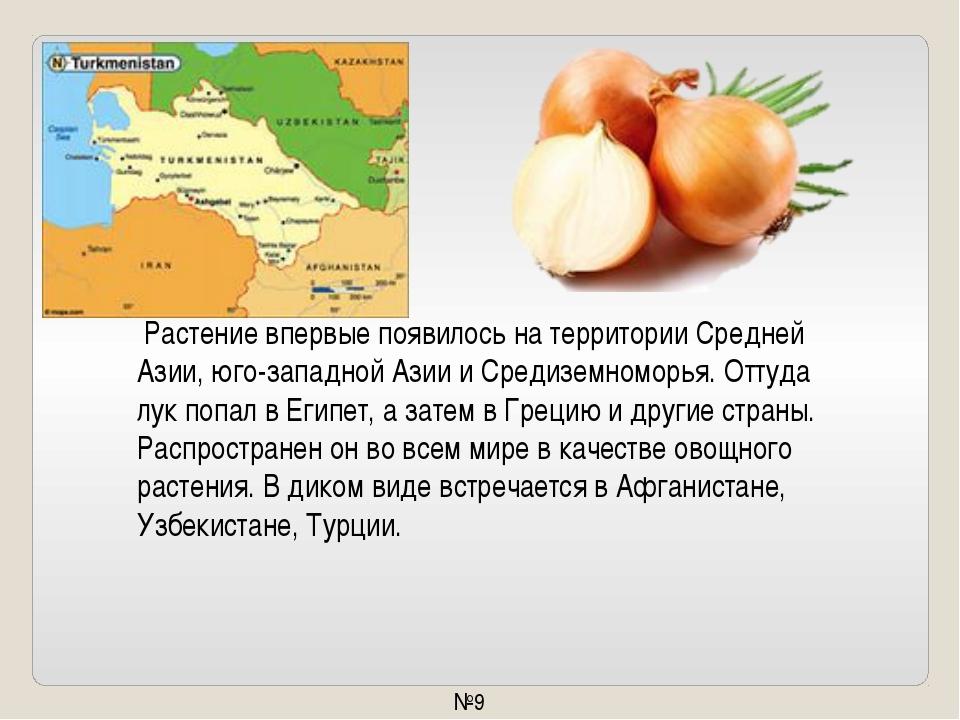 Растение впервые появилось натерритории Средней Азии, юго-западной Азии иС...