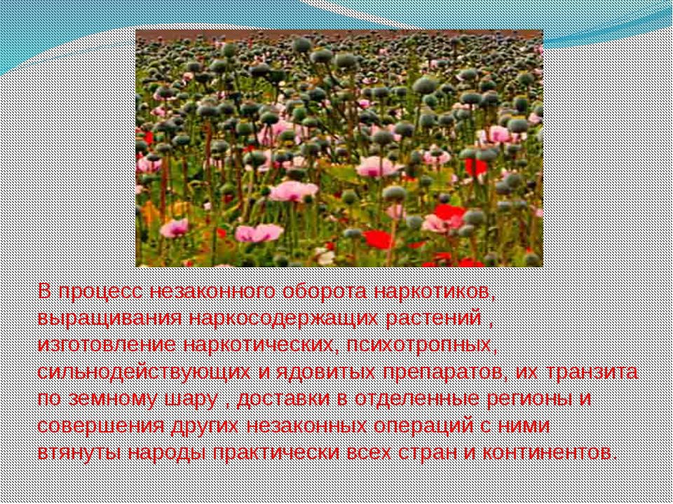 В процесс незаконного оборота наркотиков, выращивания наркосодержащих растени...