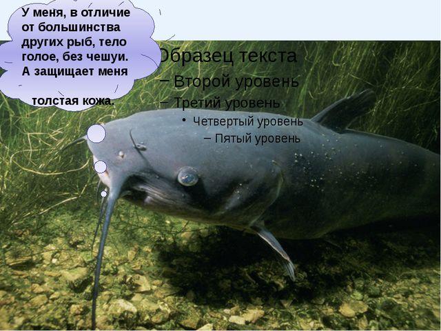 сельдь акула треска камбала Морские рыбы