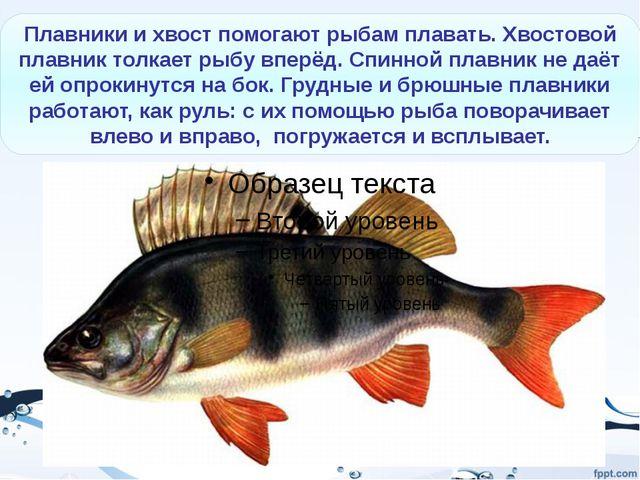 Морские рыбы Рыба-меч Рыба-молот Палтус (морской язык) Ставрида