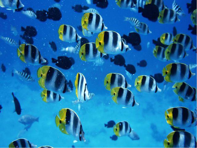 В воде они живут. Нет клюва, а клюют.