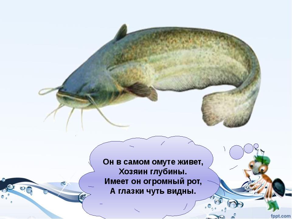 Определи среду обитания рыб - речная - морская