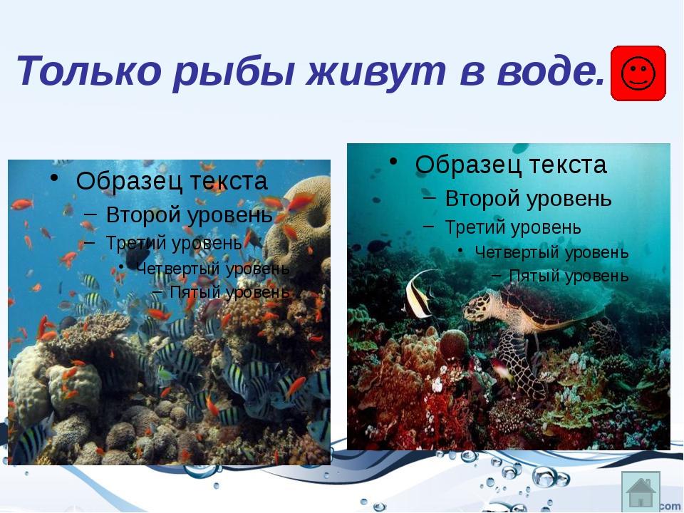 Уменя, вотличие отбольшинства других рыб, тело голое, без чешуи. А защища...