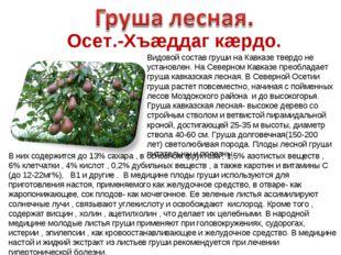 Осет.-Хъæддаг кæрдо. Видовой состав груши на Кавказе твердо не установлен. На