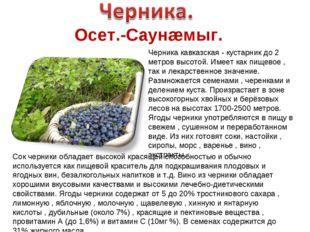 Осет.-Саунæмыг. Черника кавказская - кустарник до 2 метров высотой. Имеет как
