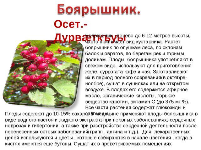 Осет.-Дурвæткъуы Боярышник - дерево до 6-12 метров высоты, часто принимает ви...