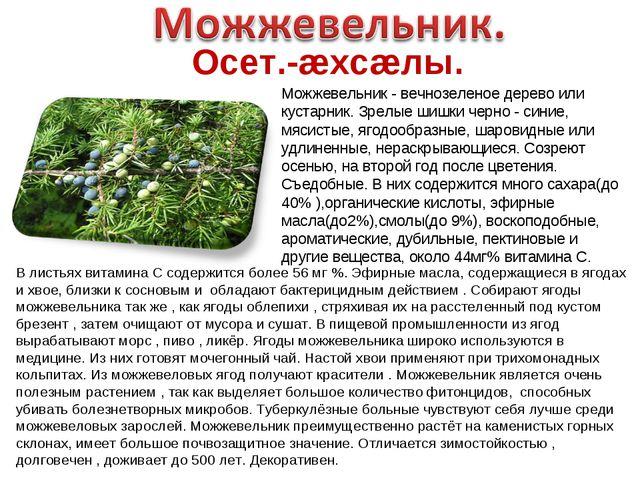 Осет.-æхсæлы. Можжевельник - вечнозеленое дерево или кустарник. Зрелые шишки...