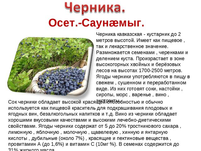 Осет.-Саунæмыг. Черника кавказская - кустарник до 2 метров высотой. Имеет как...