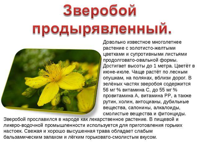Довольно известное многолетнее растение с золотисто-желтыми цветками и супрот...