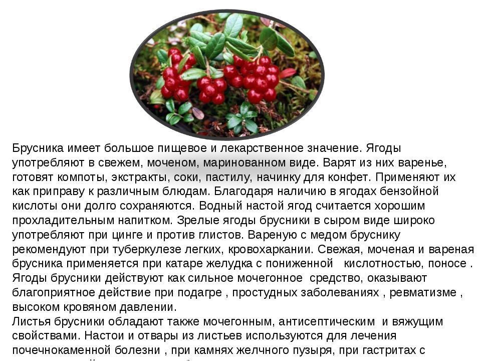 Брусника имеет большое пищевое и лекарственное значение. Ягоды употребляют в...
