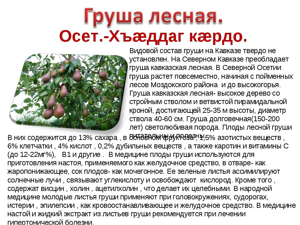 Осет.-Хъæддаг кæрдо. Видовой состав груши на Кавказе твердо не установлен. На...