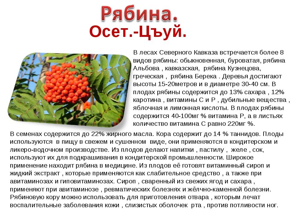 Осет.-Цъуй. В лесах Северного Кавказа встречается более 8 видов рябины: обыкн...