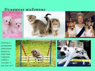 Домашние животные Любовь к домашним животным является поистине главным хобби