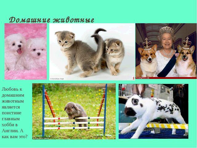 Домашние животные Любовь к домашним животным является поистине главным хобби...