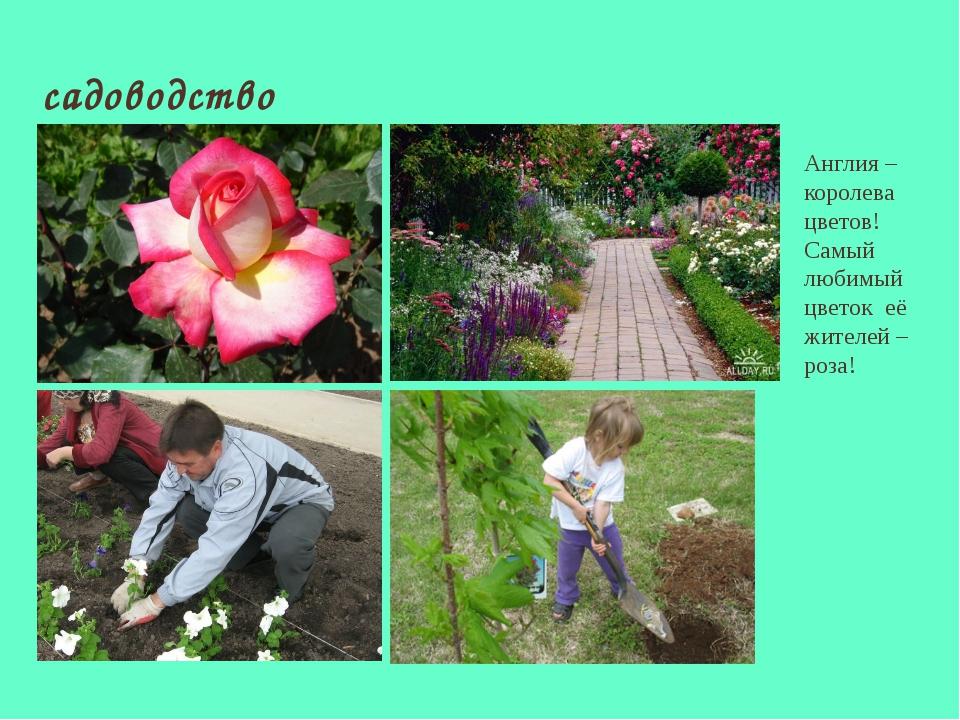 садоводство Англия – королева цветов! Самый любимый цветок её жителей – роза!