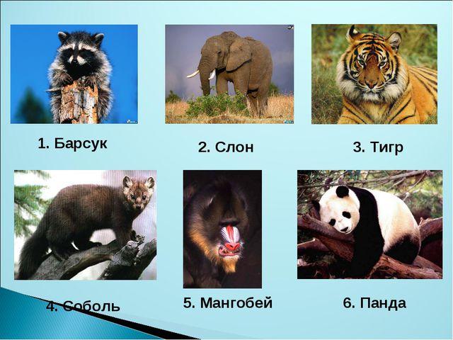 1. Барсук 2. Слон 3. Тигр 4. Соболь 5. Мангобей 6. Панда
