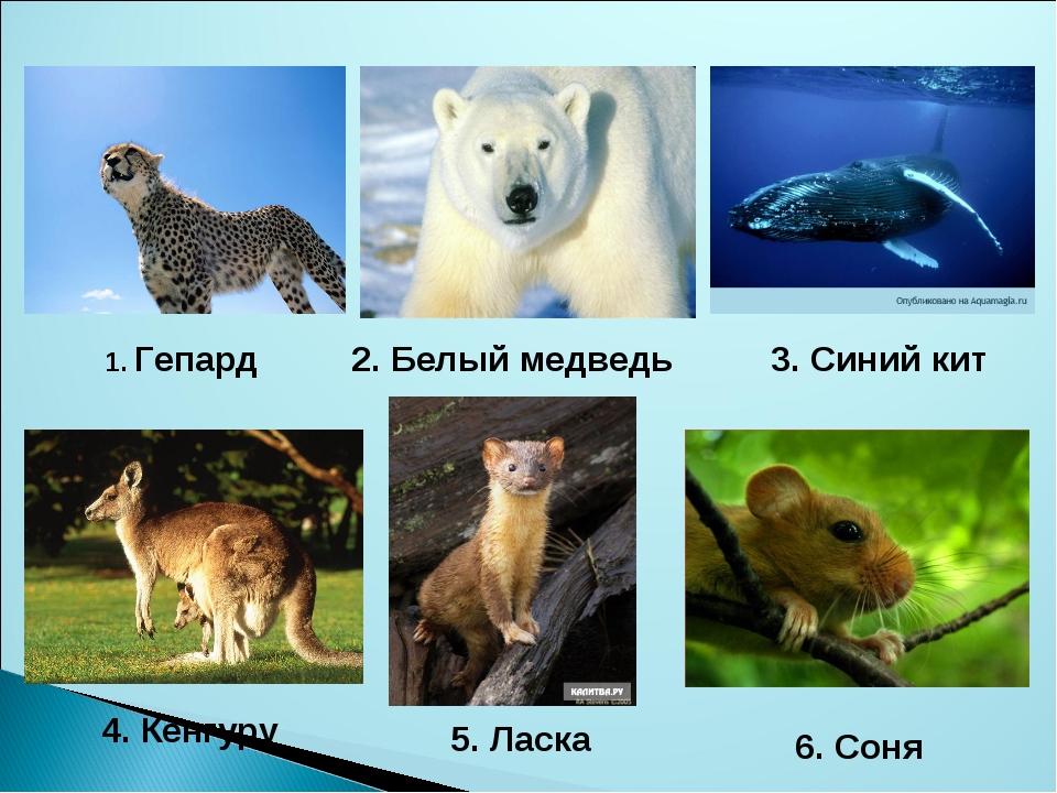 1. Гепард 2. Белый медведь 3. Синий кит 4. Кенгуру 5. Ласка 6. Соня