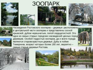 ЗООПАРК Насаждения Ростовского зоопарка – деревья- расположены в центральной