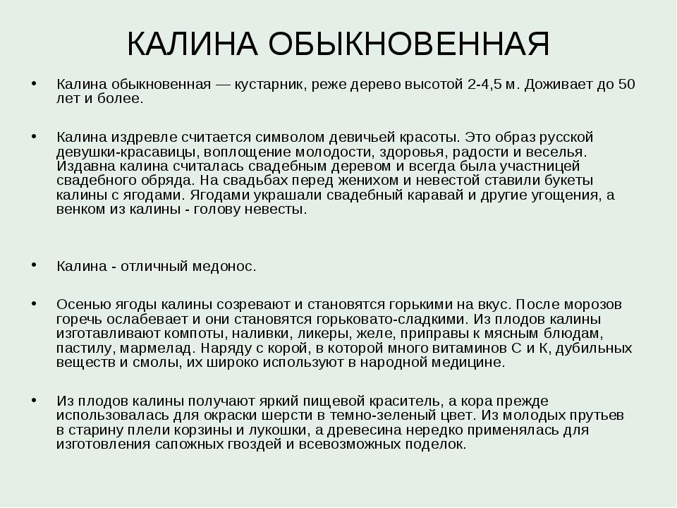КАЛИНА ОБЫКНОВЕННАЯ Калина обыкновенная — кустарник, реже дерево высотой 2-4,...