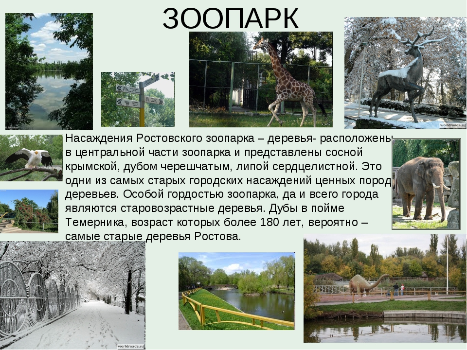 ЗООПАРК Насаждения Ростовского зоопарка – деревья- расположены в центральной...