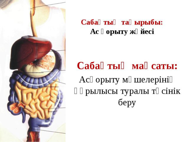 Сабақтың тақырыбы: Ас қорыту жүйесі Сабақтың мақсаты: Асқорыту мүшелерінің құ...