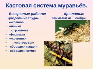 Кастовая система муравьёв. Бескрылые рабочие Крылатые «разделение труда»: сам