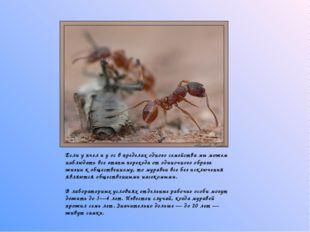 Если у пчел и у ос в пределах одного семейства мы можем наблюдать все этапы