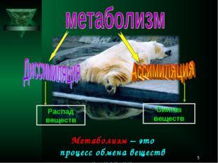 * Метаболизм – это процесс обмена веществ и энергии. Распад веществ Синтез ве