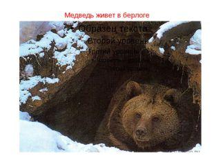 Медведь живет в берлоге