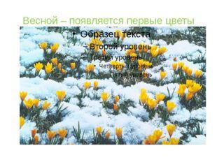 Весной – появляется первые цветы
