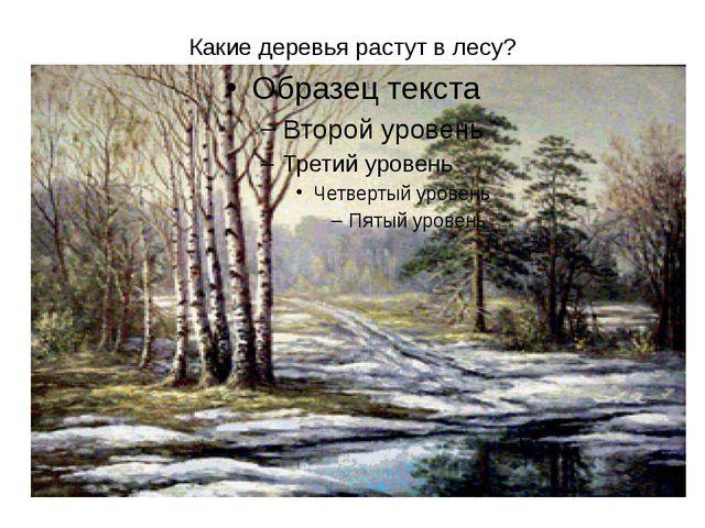 Какие деревья растут в лесу?
