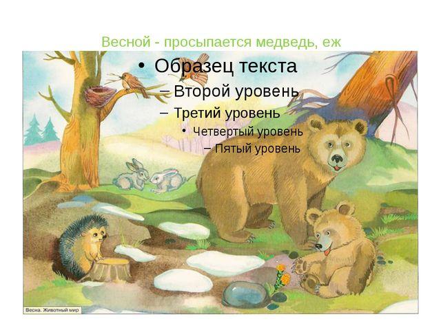 Весной - просыпается медведь, еж