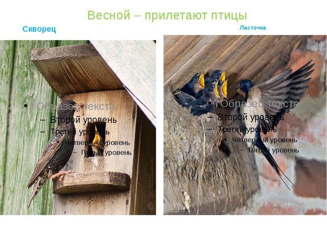 Весной – прилетают птицы Скворец Ласточка