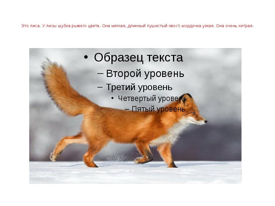 Это лиса. У лисы шубка рыжего цвета. Она мягкая, длинный пушистый хвост, мор...