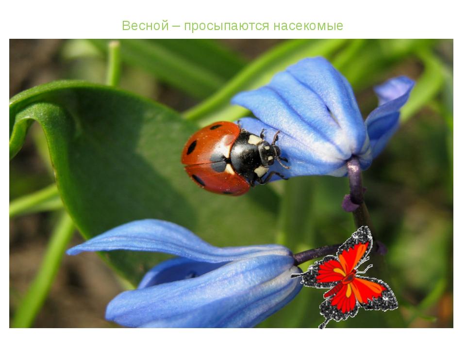 Весной – просыпаются насекомые