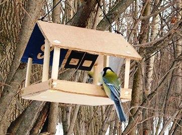 F:\птицы парк\синицы 2.jpg