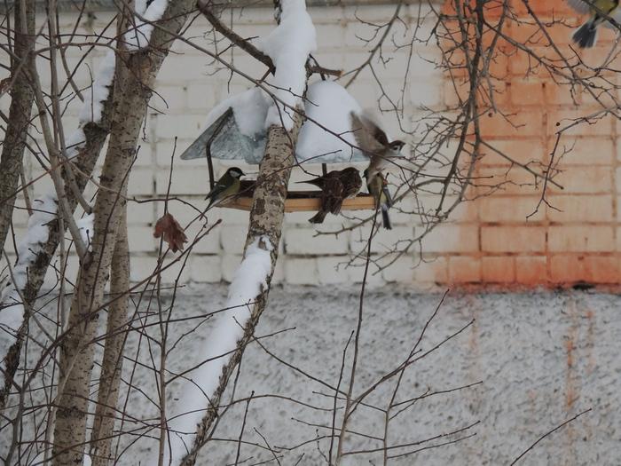 F:\птицы парк\синицы и воробьи.JPG