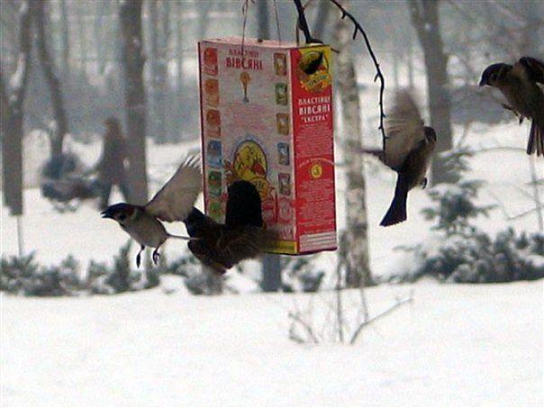 F:\птицы парк\воробьи3.jpg