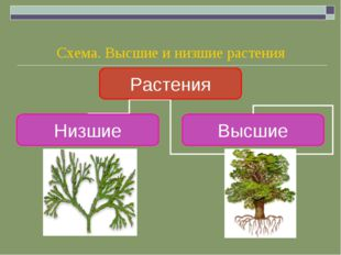 Схема. Высшие и низшие растения