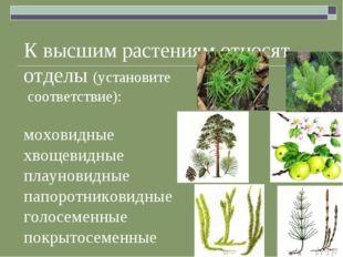К высшим растениям относят отделы (установите соответствие): моховидные хвоще
