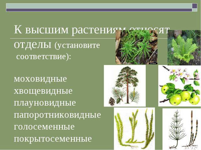 К высшим растениям относят отделы (установите соответствие): моховидные хвоще...