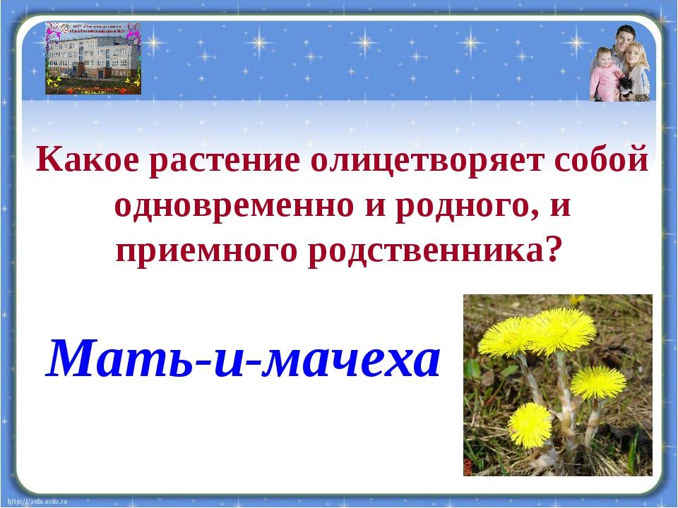 Какое растение олицетворяет собой одновременно и родного, и приемного родстве...