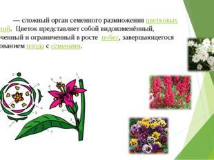 Цвето́к — сложный орган семенного размножения цветковых растений. Цветок пре