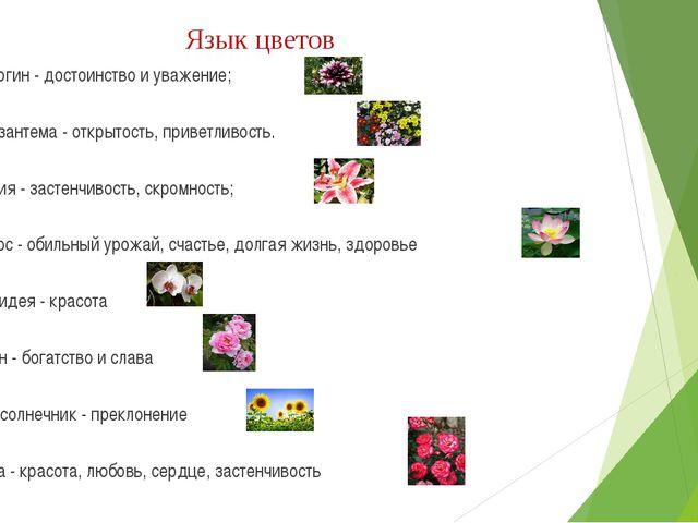 Язык цветов Георгин - достоинство и уважение; Хризантема - открытость, привет...