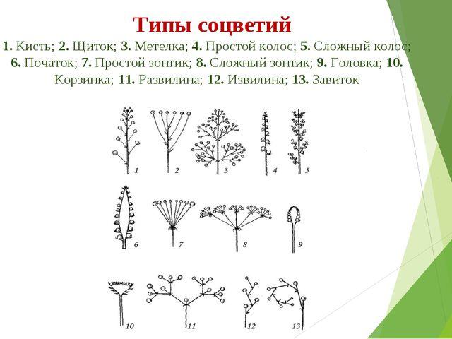 Типы соцветий 1. Кисть; 2. Щиток; 3. Метелка; 4. Простой колос; 5. Сложный...